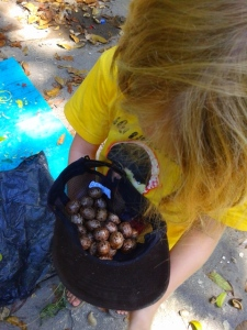 We were quite taken by these beautiful mahogany tree seeds, so we collected lots!